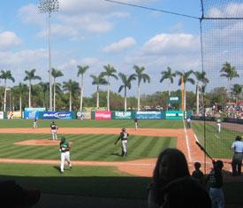 Baseball and Palm Trees!