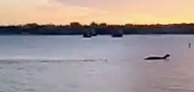 UPDATED:  Amazing Lake Champlain Monster Video Surfaces
