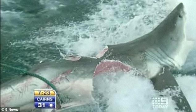 White on White (Shark) Violence