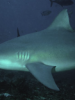 Some Really Cool Science – Swimming with Sharks