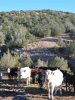 Alamo Canyon Ranch